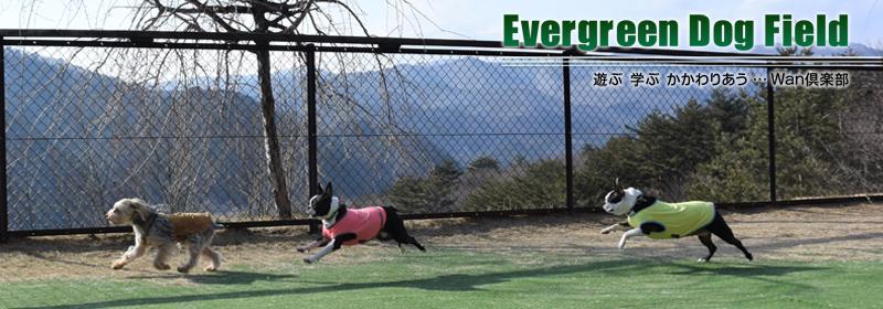 pet-EvergreenDogField